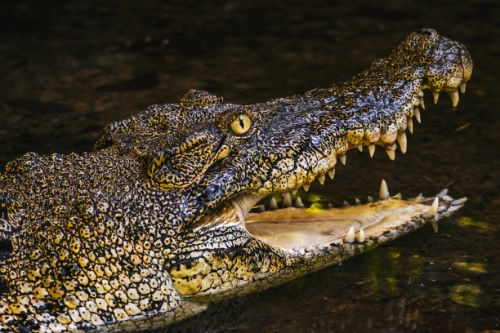 Achtung Foto Krokodil